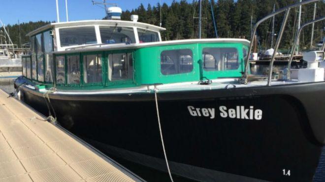 grey-selkie